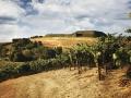Artesa Winery - image 03.jpg
