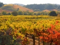 Dry Creek Vineyard - image 03.jpg