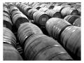 Jovino Oregon Wines - image 03.jpg