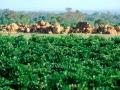 Plantagenet Wines - image 04.jpg