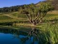 Schug Winery - image 01.jpg