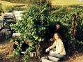 Schug Winery - image 02.jpg