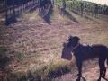 Silverado Vineyards - image 01.jpg