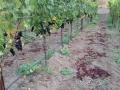Steelhead Vineyards - image 03.jpg