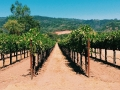 Valley of the Moon Winery - image 02.jpg