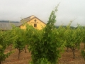 Valley of the Moon Winery - image 03.jpg
